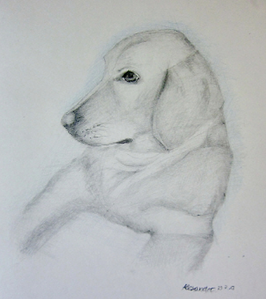 Bleistiftzeichnung Hundeportrait