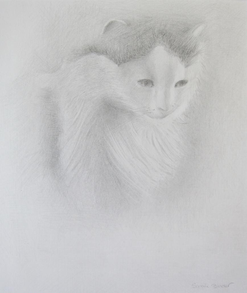 Katzen Studie